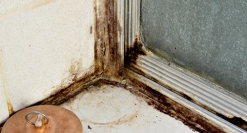Issues like mold and mildew are likely to deter potential buyers.